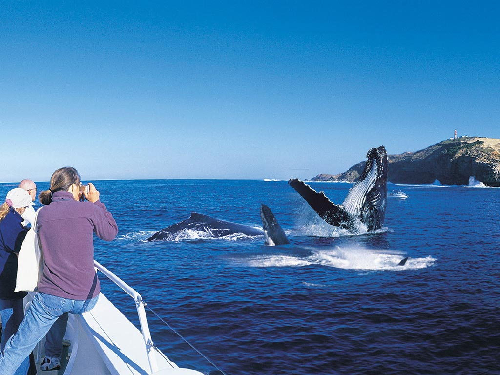 tangalooma-whale-watching-from-cruise-boat-1024x768