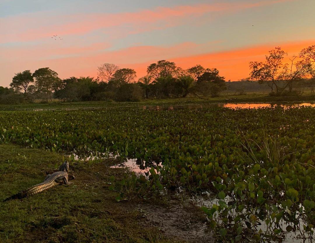 Brazil Pantanal Campo Grande Pantanal tour