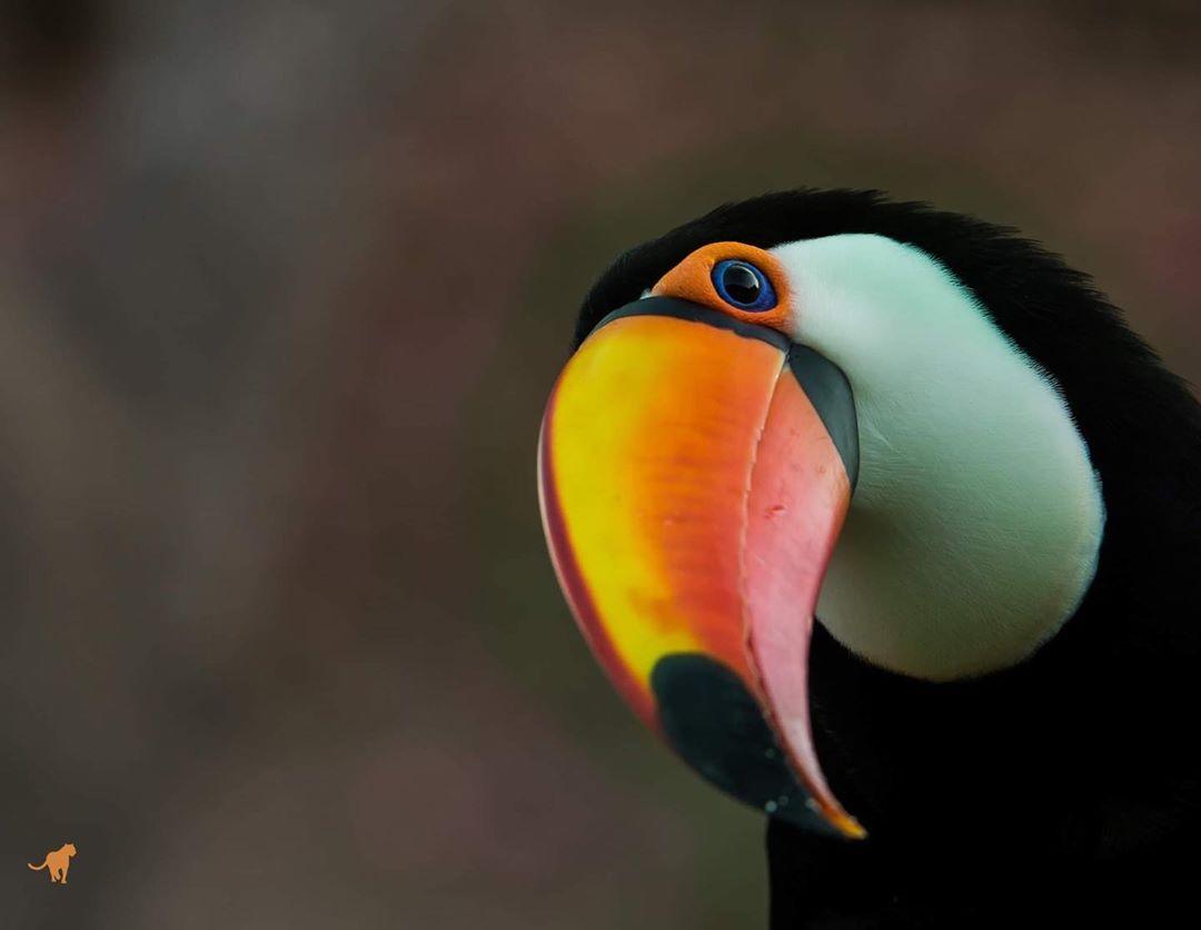 Pantanal birding watch tour brazilecotour