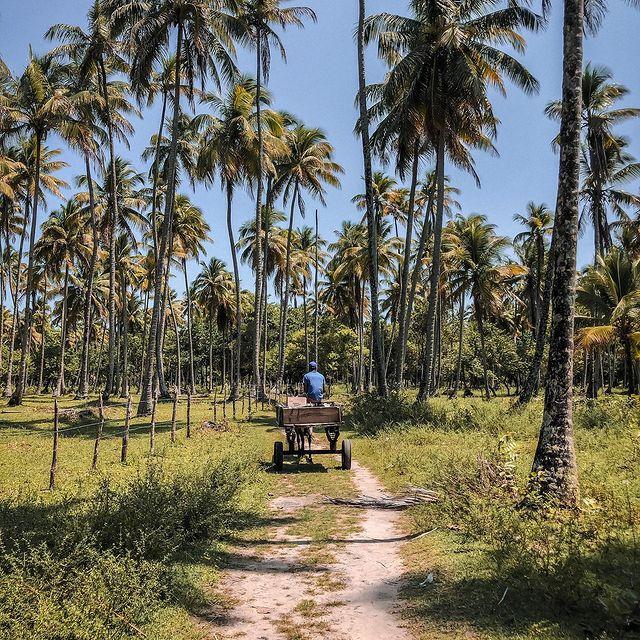 hotels boipeba island