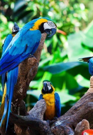 Amazon-Parrots-trips-to-brazil-amazon-tours-Amazon-river-destination-brazil-tours-trips-travel-jouney-holidays-