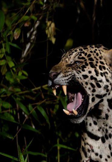 Pantanal Jaguar tour Brazilecotour