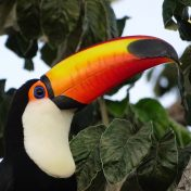 amazone-rainforest-nature-wild-animals-rio-negro-lodge-tours-manaus